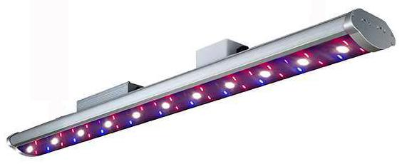 G150 Growlight Image